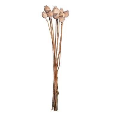 Droogbloemen Papaver 10 stuks - 60 cm - Leen Bakker