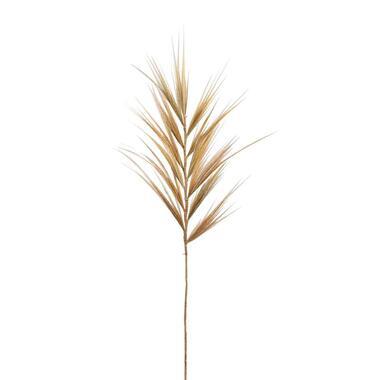 Droogbloem Pluimgras - bruin - 118 cm - Leen Bakker