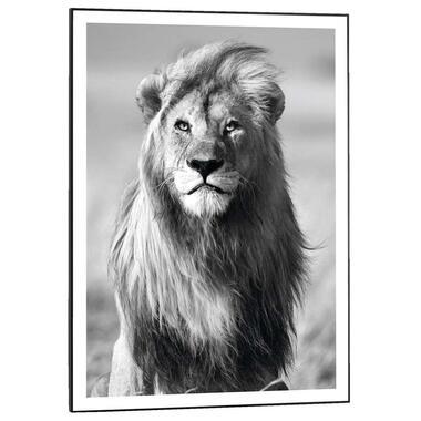Poster met lijst Leeuw - 70x50 cm - Leen Bakker